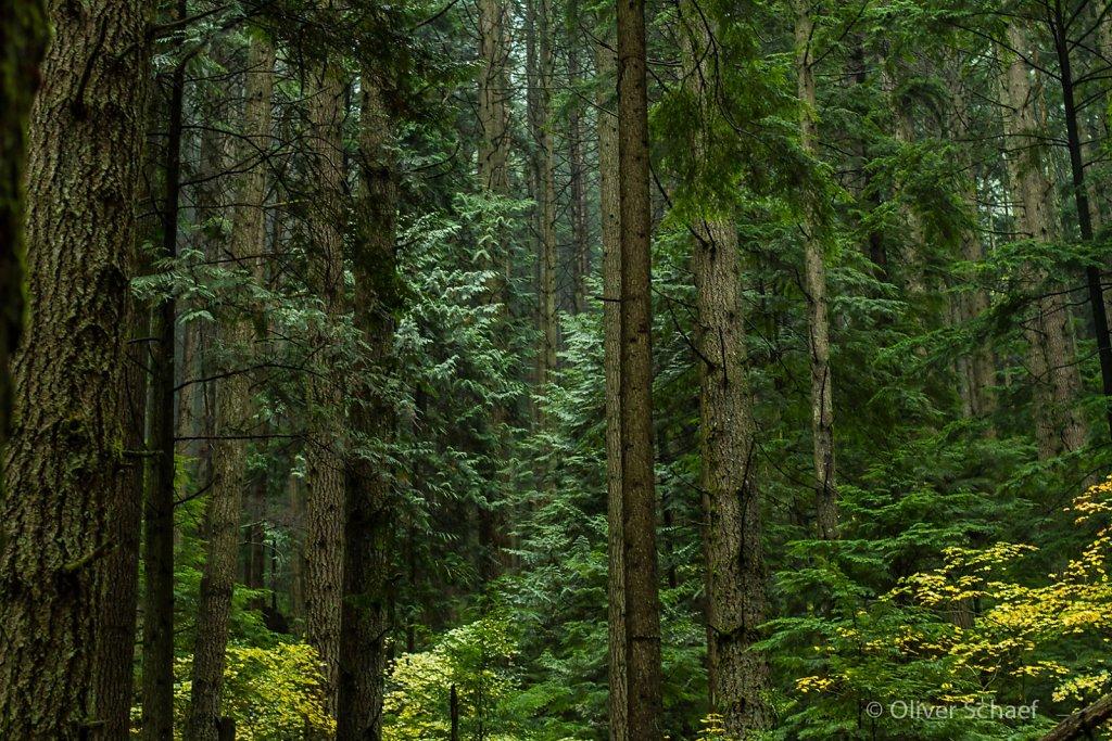 Canada - Lynn Valley